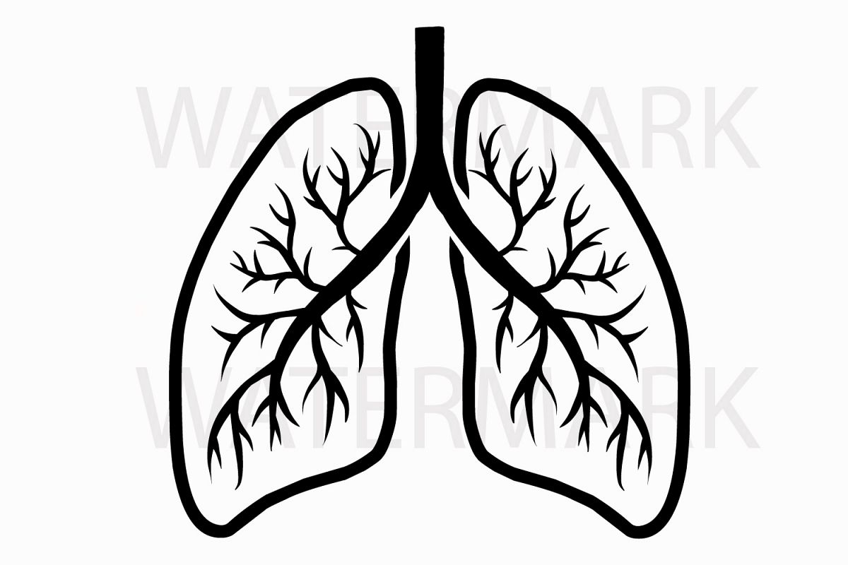 Human Real Lungs - SVG/JPG/PNG Hand Drawing example image 1
