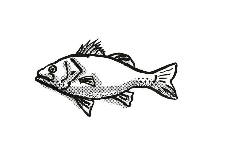 Australian Bass Fish Cartoon Retro Drawing example image 1