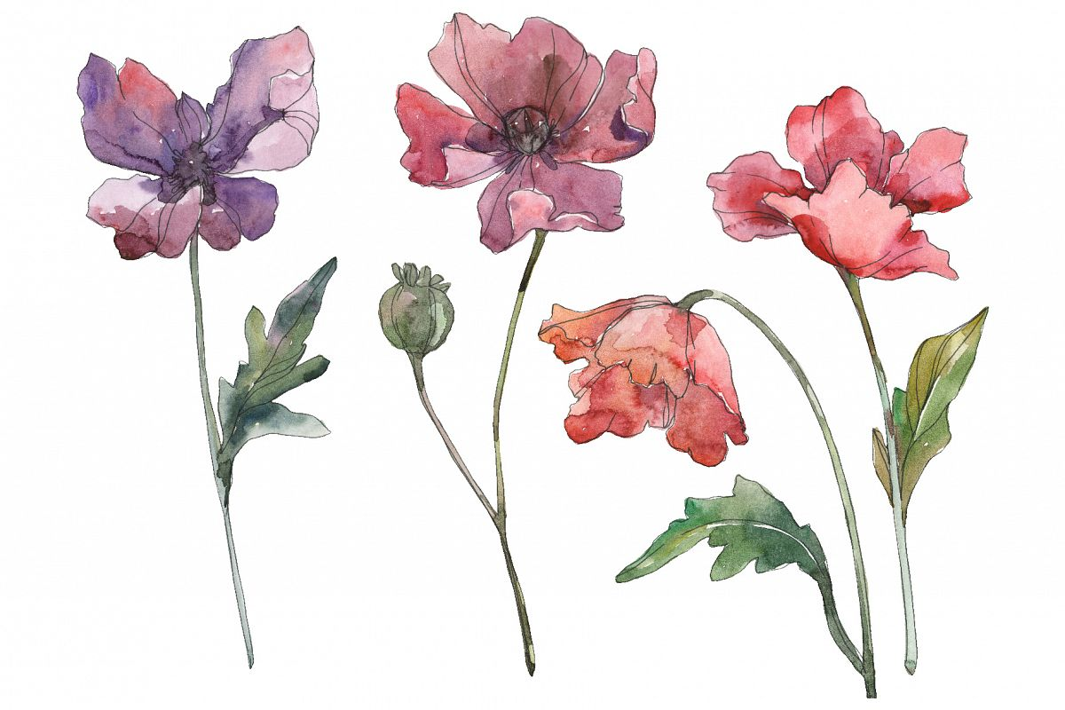 Poppy Watercolor png example image 1