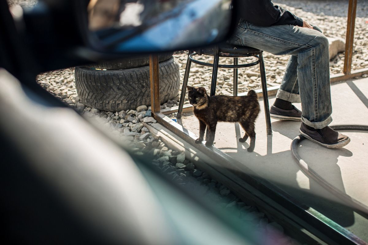 Cat at the gas station example image 1