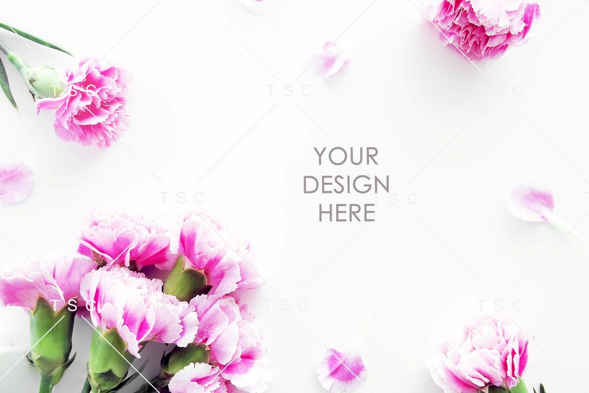Pink Carnation Flowers Stock Photo example image 1