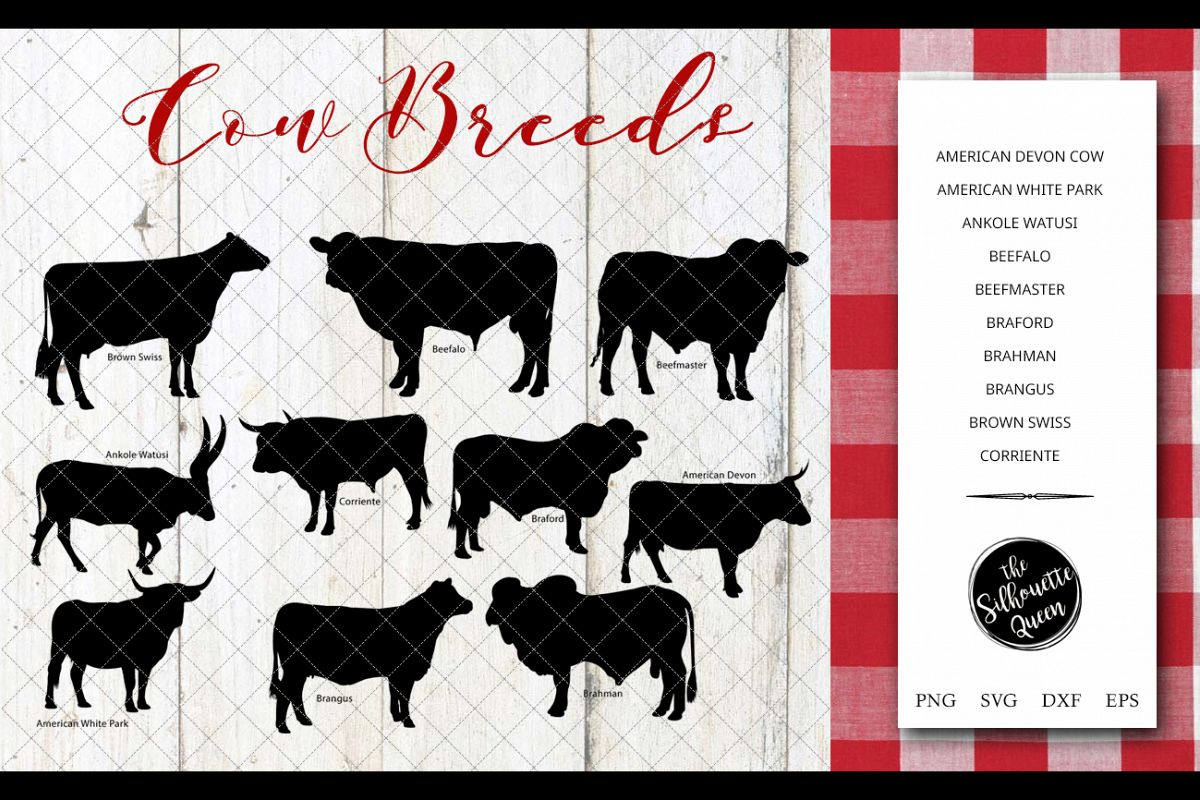 Cow Breeds Silhouette Vector svg file, cow svg cut file example image 1