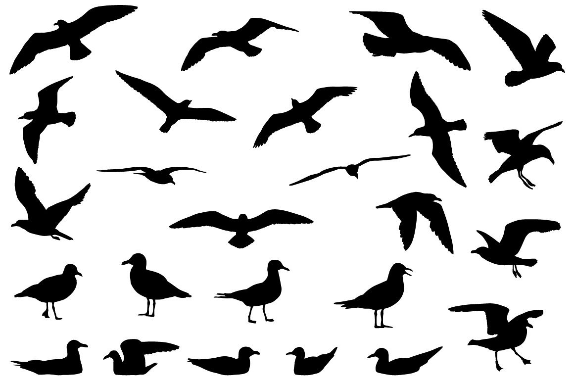 Gulls silhouette example image 1