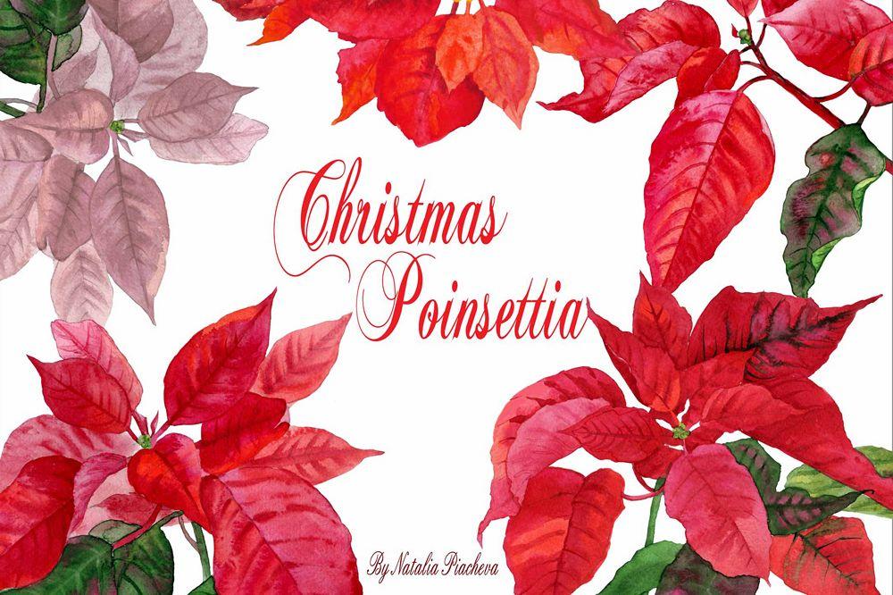 Christmas Poinsettia example image 1