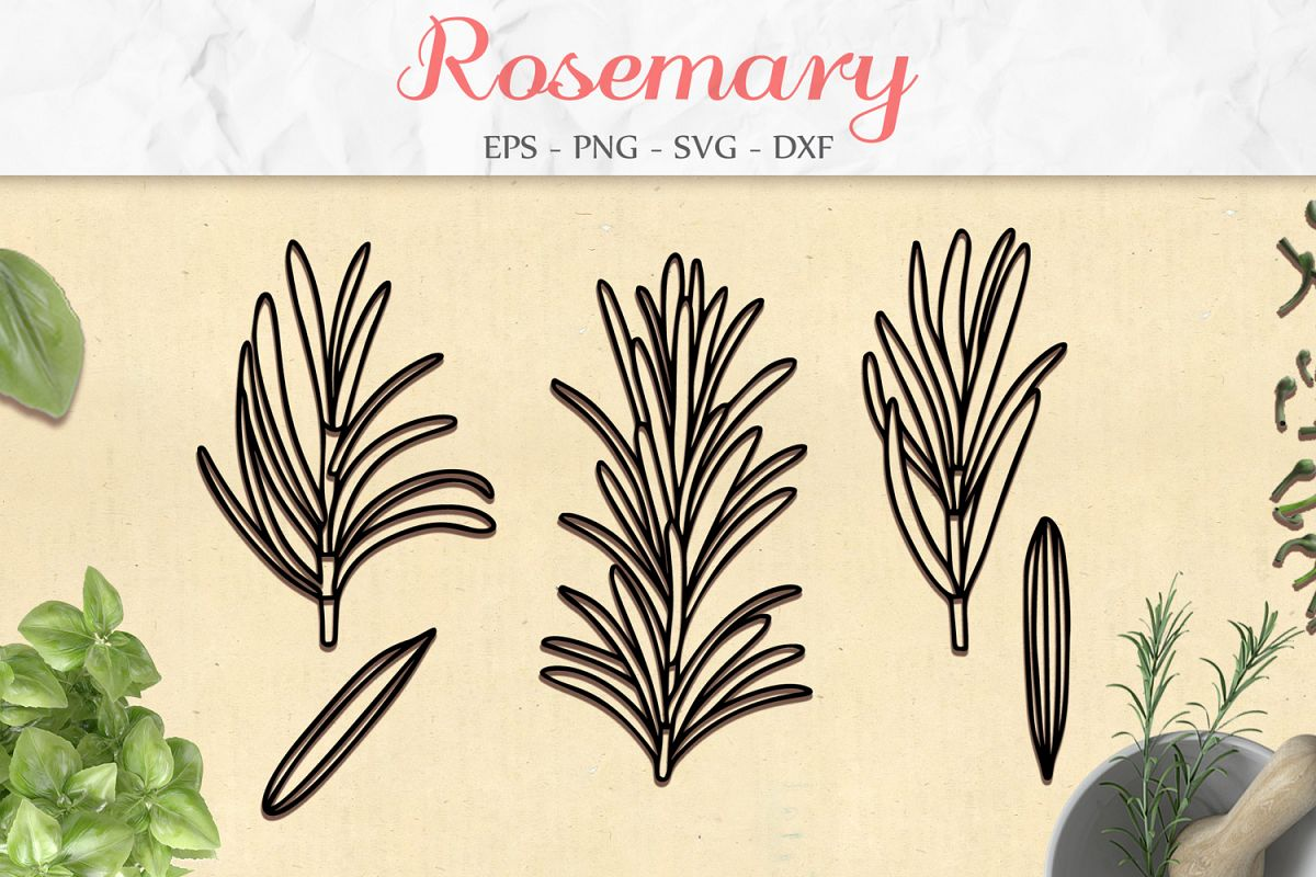Rosemary Set svg png dxf eps - Rosemary Herb Paper Cut example image 1