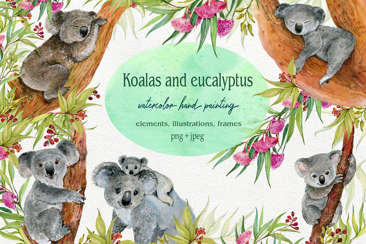 Koala & eucalyptus set illustration example image 1