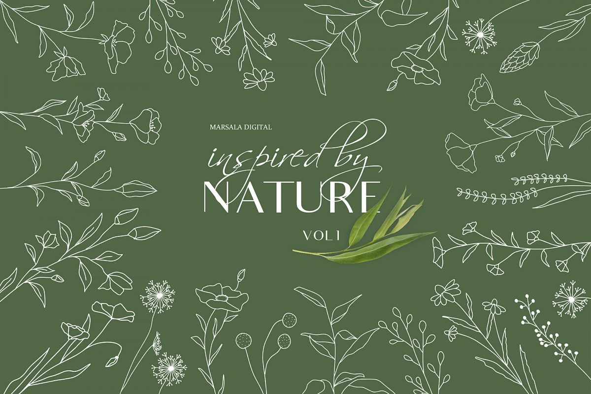 Botanical Line Art, Wildflowers Clipart, Leaves Clipart example image 1