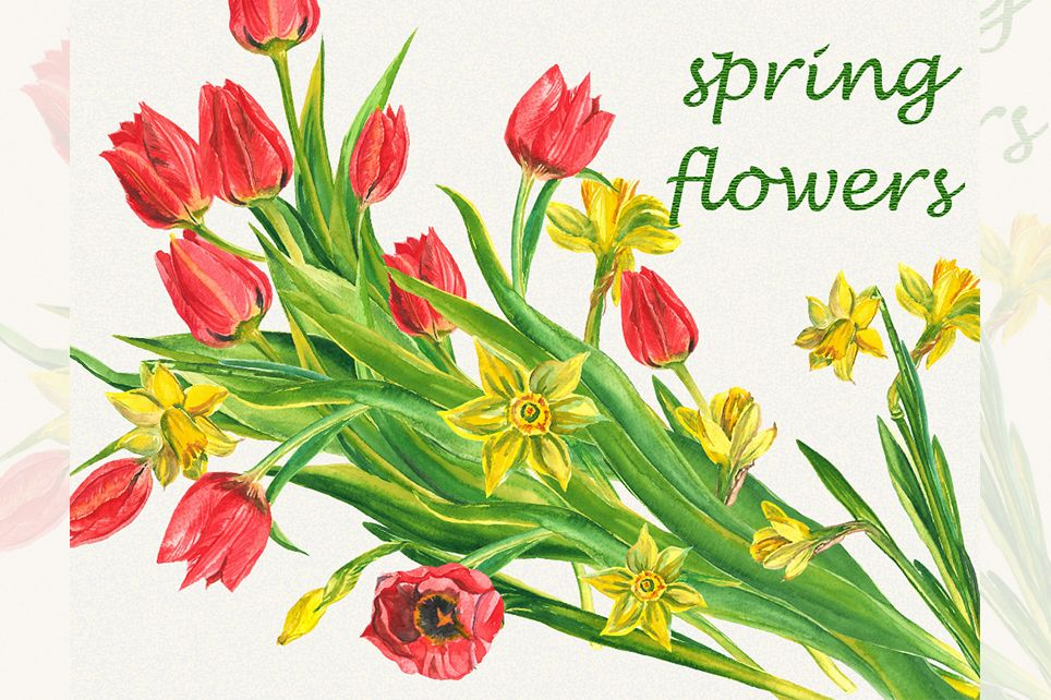 Spring flower clipart, Tulip clipart, narcissus clipart example image 1