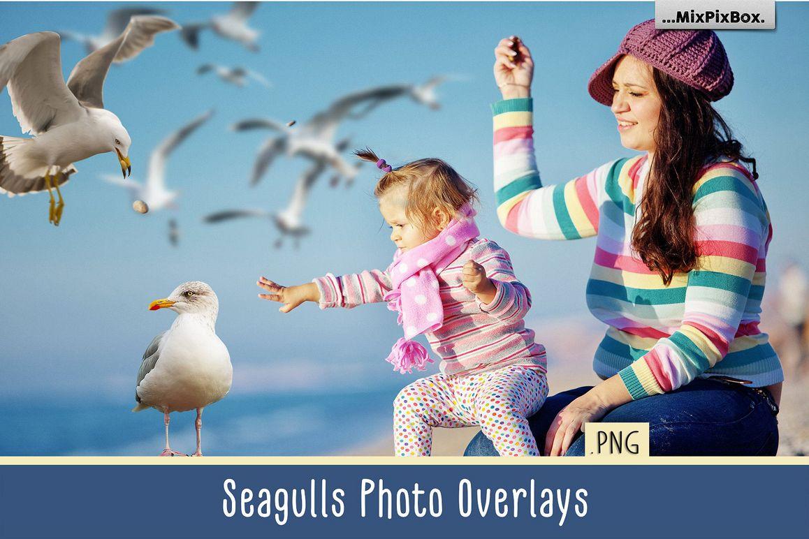Seagulls Photo Overlays example image 1
