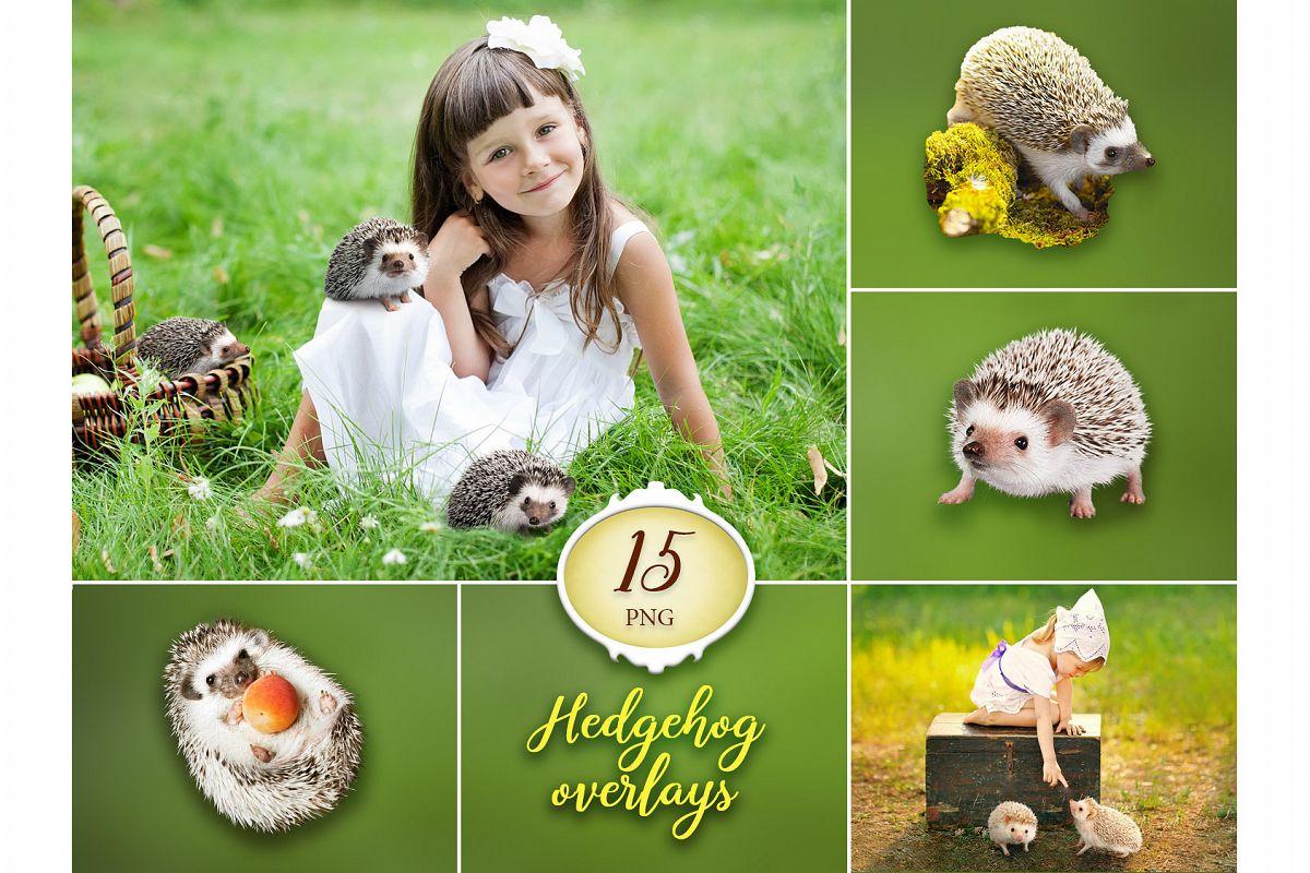 15 Hedgehog Photo Overlays example image 1
