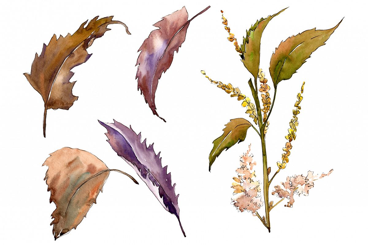 Sweet chestnut PNG watercolor leaves set example image 1