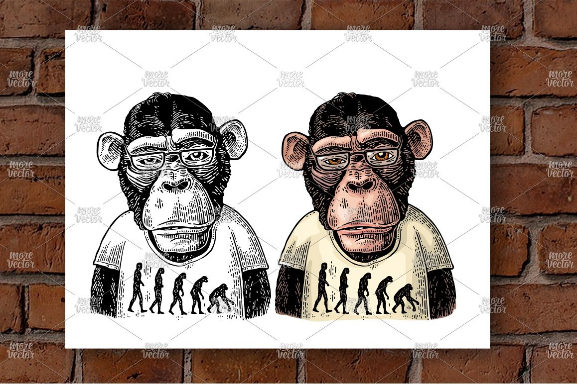Monkey T-shirt theory evolution contrary  Vintage engraving