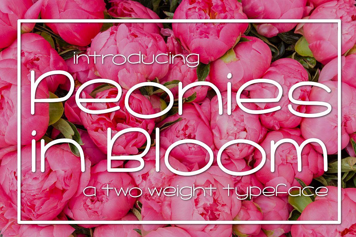 Peonies in Bloom example image 1