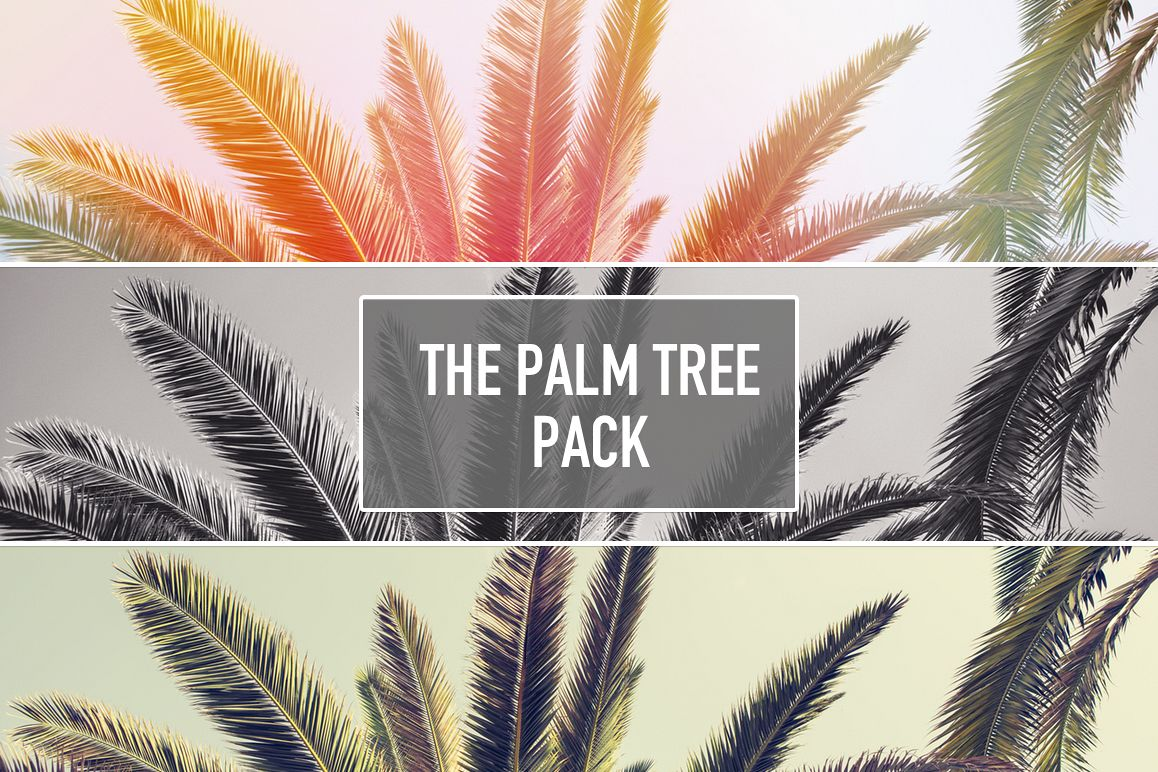 The PALM TREE Pack example image 1