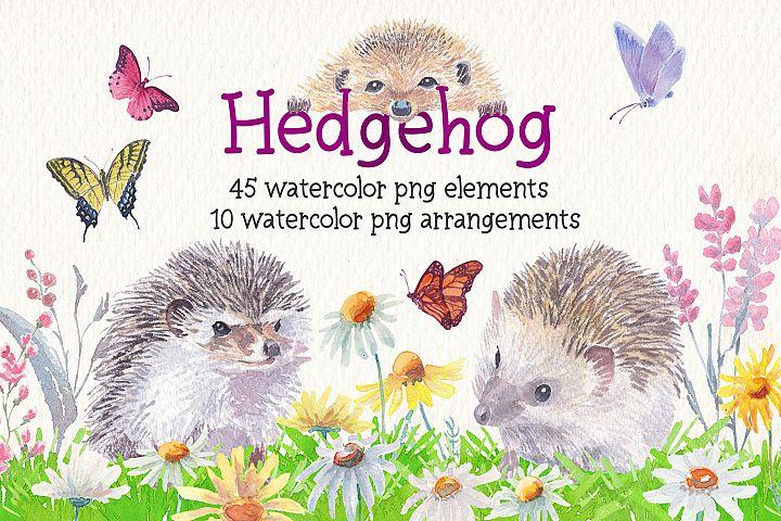 Hedgehog watercolor clipart