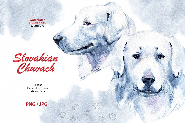 Watercolor dog - Slovakian Chuvach