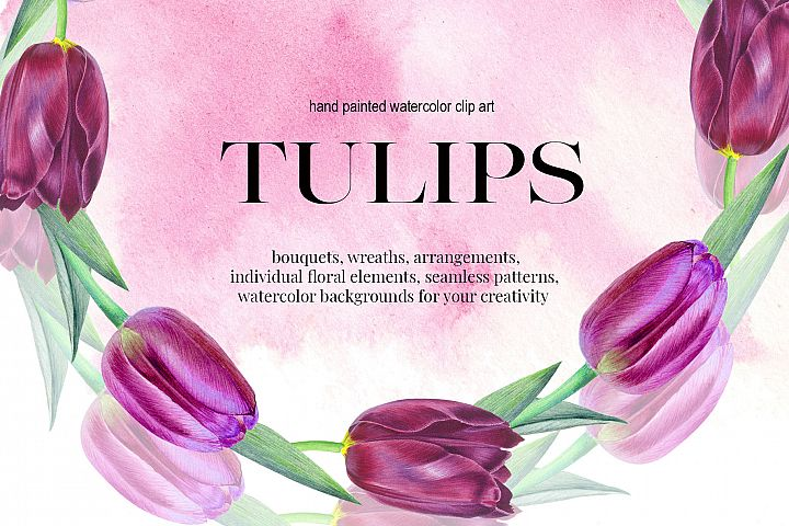 TULIPS. SPRING BOUQUET. Hand painteg watercolor clip art.