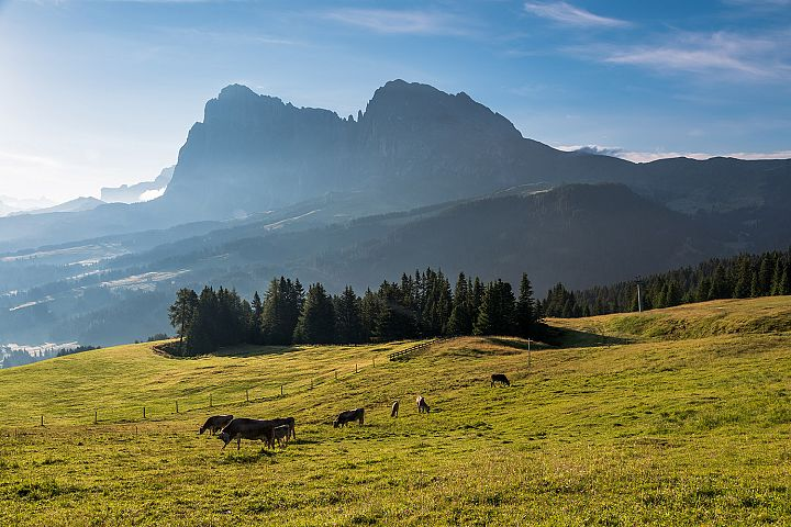 Seiser Alm and animals