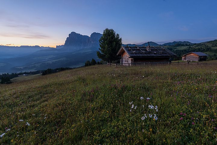 Beautiful flowers and cottages at Alpe di Siusi at sundown