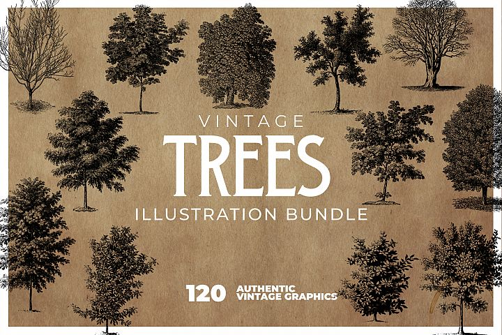 120 Vintage Tree Drawings Bundle