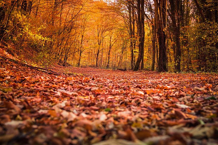 1 autumn photos, styled stock photos