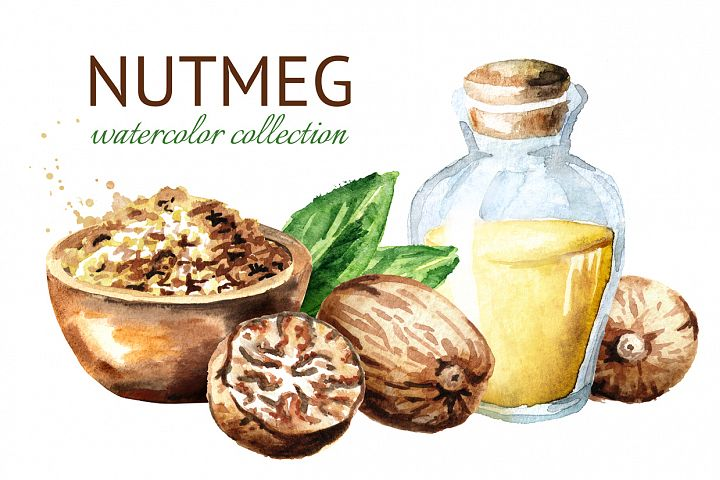 Nutmeg. Watercolor collection