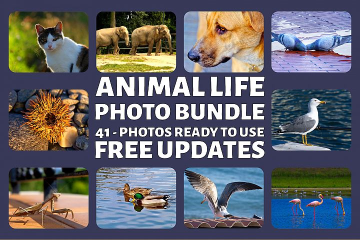 Animal Life Photo Bundle