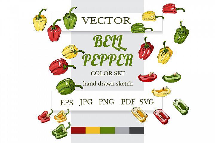 Hand drawn sketch of bell pepper. Botanical illustration.