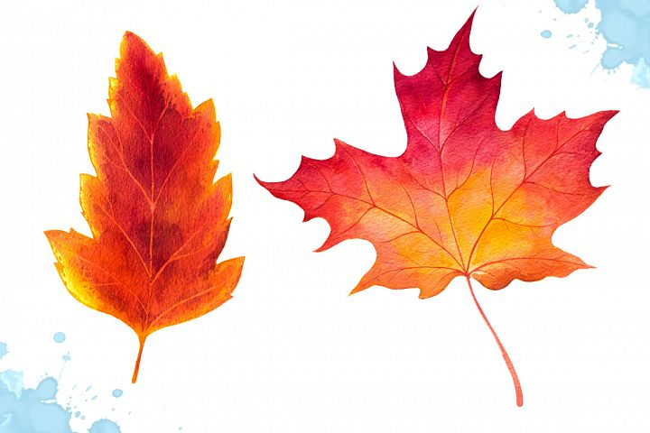 Autumn leaves. Watercolor set. example image 5