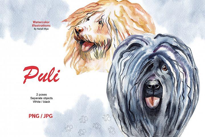 Watercolor dog - Puli