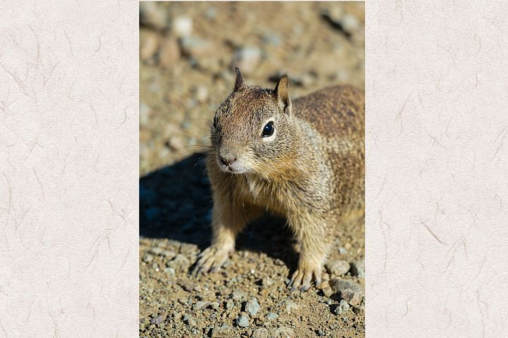 Squirrel photo 17