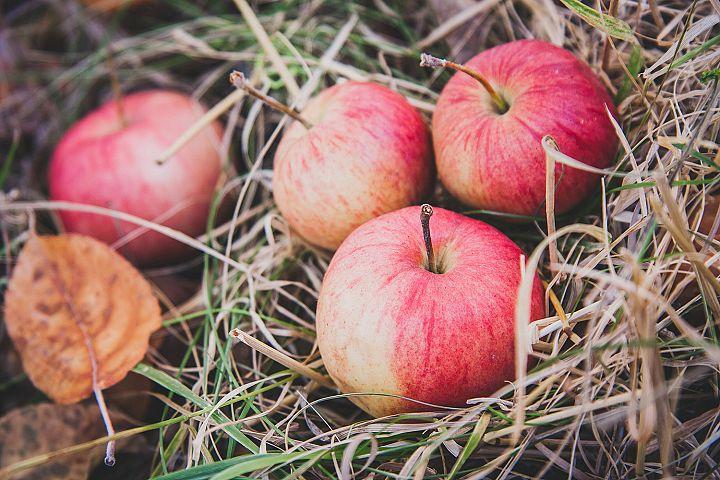 Closeup fresh autumn apples
