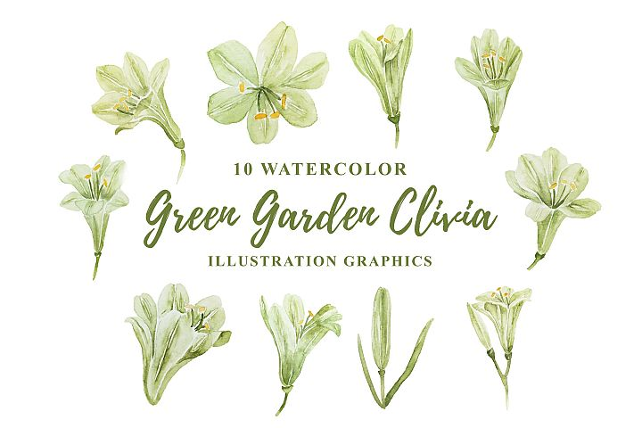 10 Watercolor Green Garden Clivia Illustration Graphics