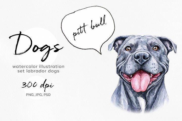 Pitt Bull. Watercolor dogs illustrations. Cute 8 dogs.