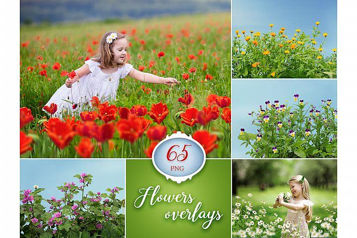 65 Flower Photo Overlays