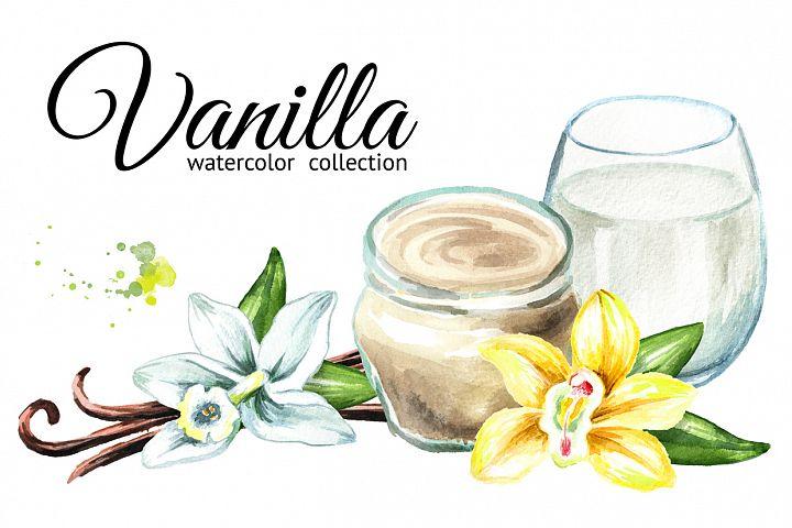 Vanilla. Watercolor collection