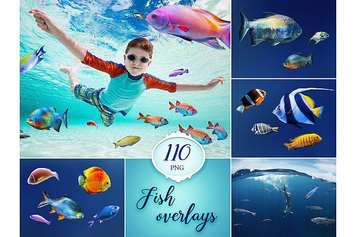 110 Fish Photo Overlays