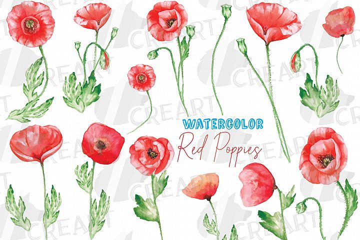 Watercolor red poppy flower and leaf decor clip art. Poppies
