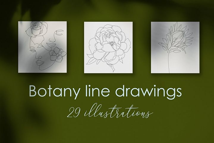 Botanical Line illustrations