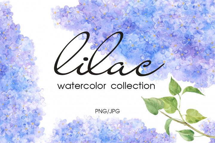 Lilac. Watercolor collection.