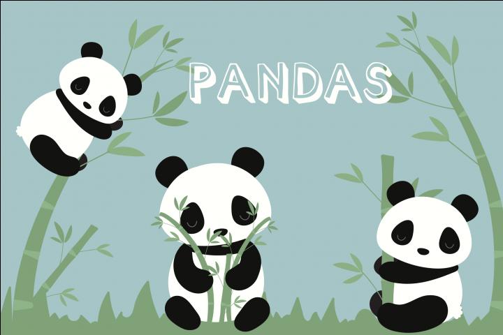 PANDA Bundle