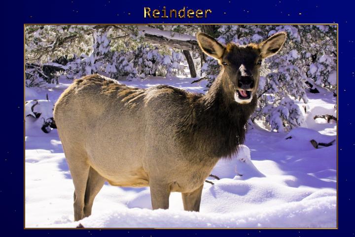 XMAS - Reindeer Lr Presets