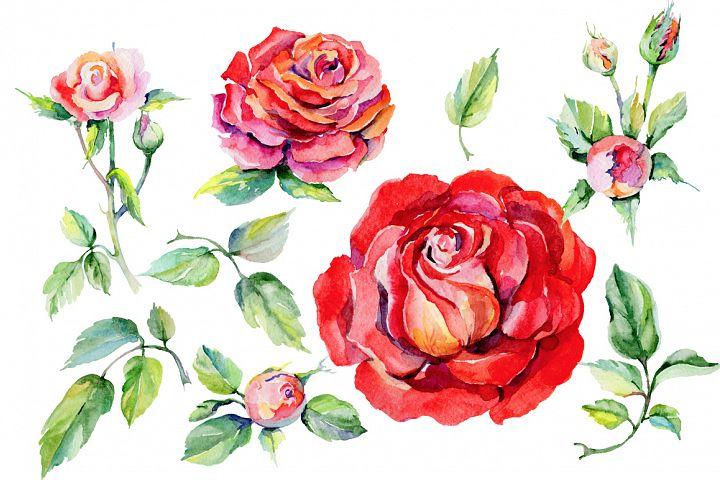 Roses PNG watercolor flower set - Free Design of The Week Design 1