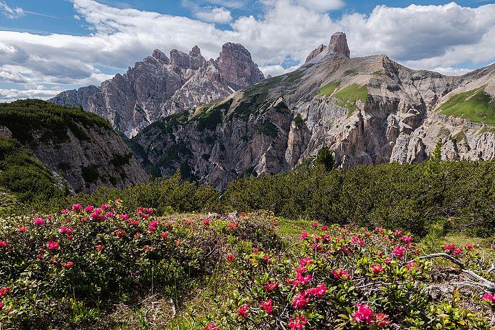 Flowers by Tre Cime di Lavaredo