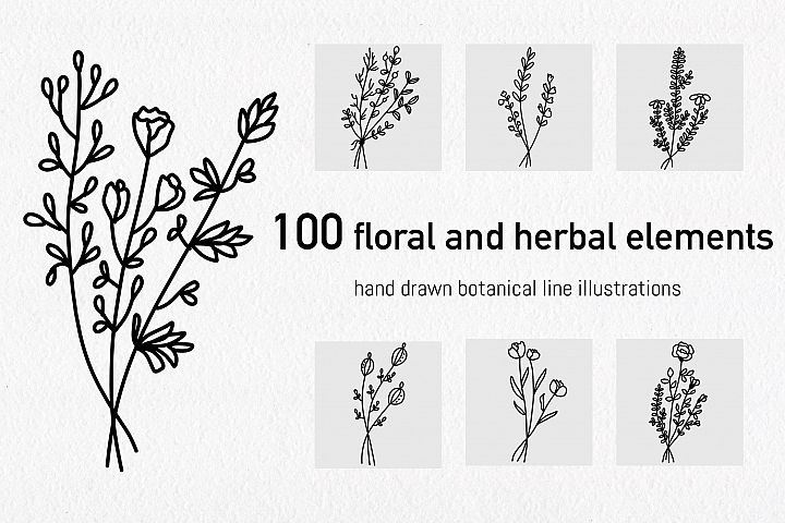 Floral and herbal elements. Hand drawn botanical art.