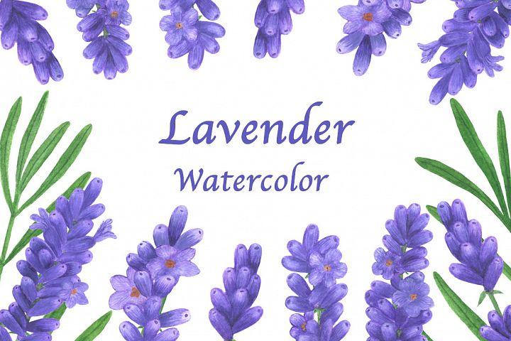 Lavender flowers watercolor