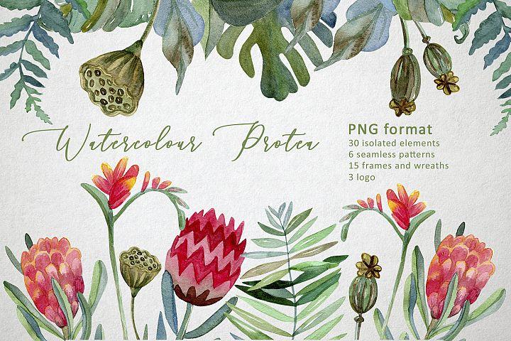 Watercolor Protea set