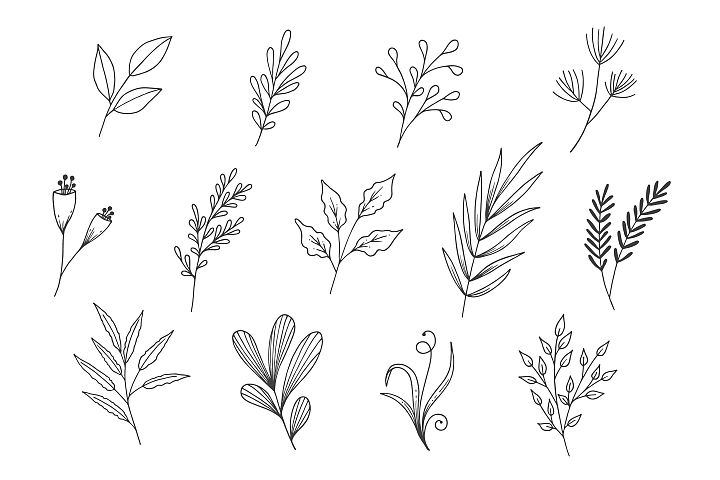 Natural Leaves Line Art Collection