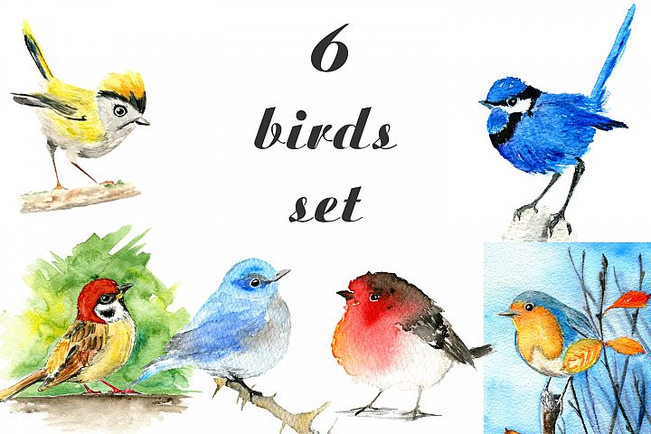 Six birds set watercolor illustrations