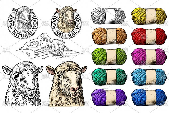 Sheep on meadow and roll yarn Vintage vector engraving